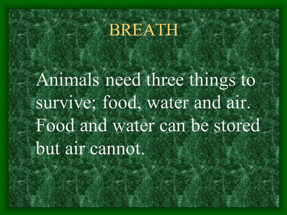 BREATH Animals need three things to survive; food, water and air. Food and water can be stored but air cannot.