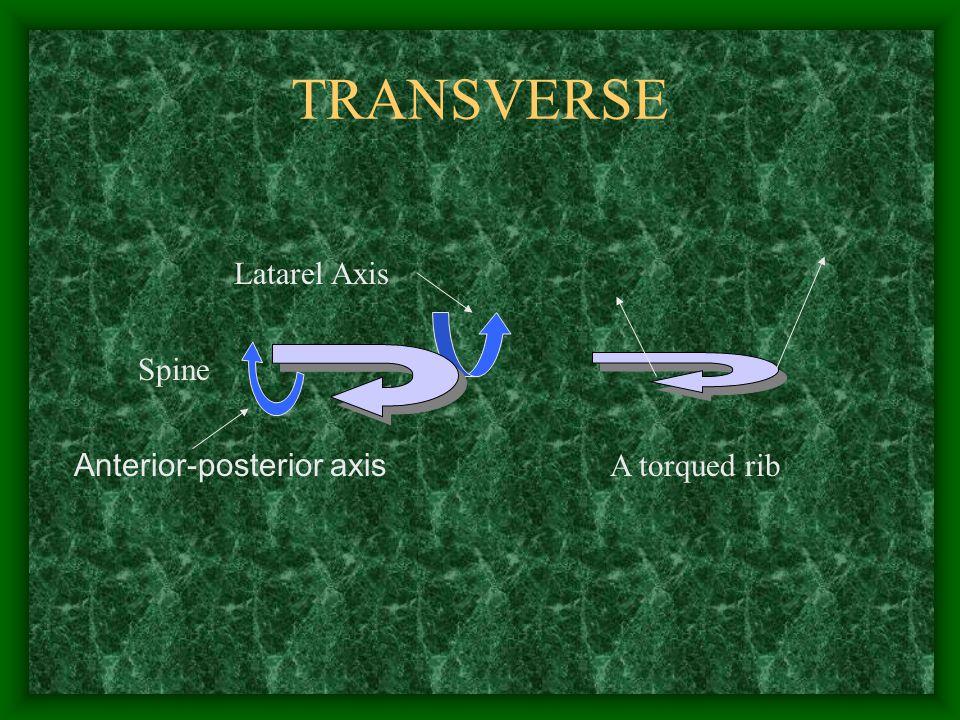 TRANSVERSE Spine Anterior-posterior axis Latarel Axis A torqued rib