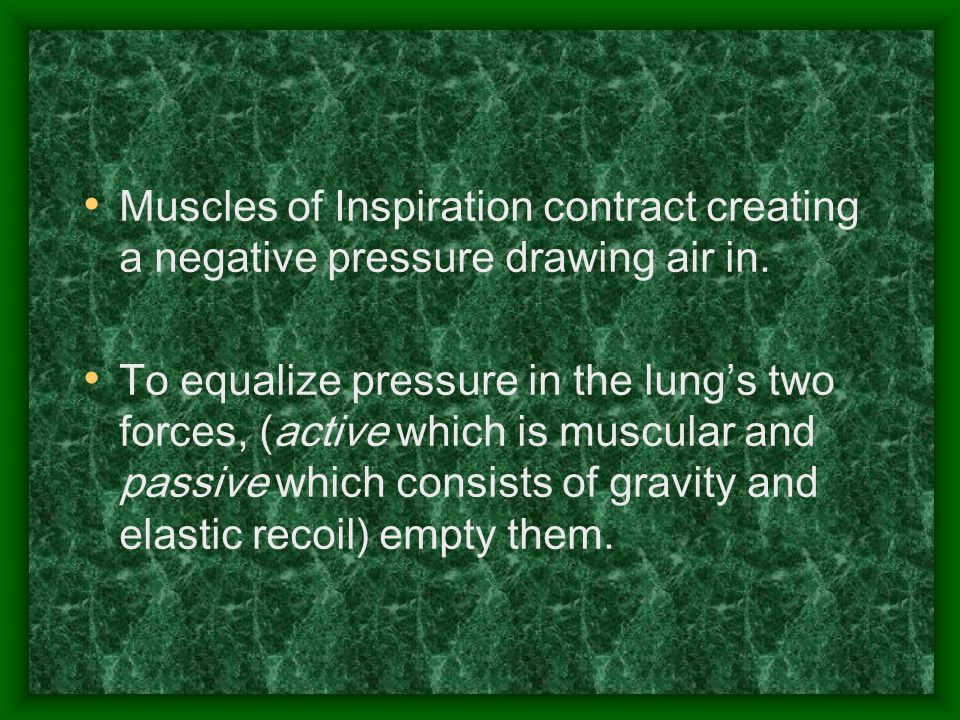 Muscles of Inspiration contract creating a negative pressure drawing air in. To equalize pressure in the lung's two forces, (active which is muscular
