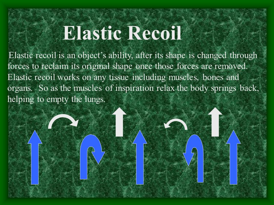 Elastic recoil is an object's ability, after its shape is changed through forces to reclaim its original shape once those forces are removed.