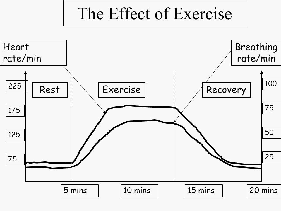 The Effect of Exercise 100 75 50 25 225 175 125 75 5 mins10 mins15 mins20 mins RestExercise Heart rate/min Breathing rate/min Recovery