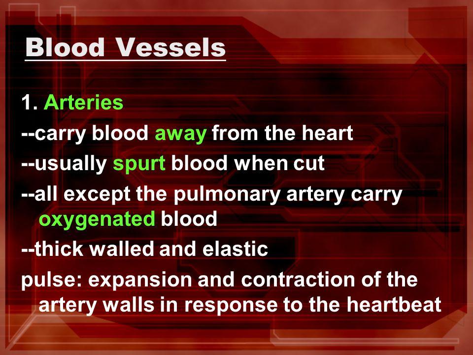 Blood Vessels 1.