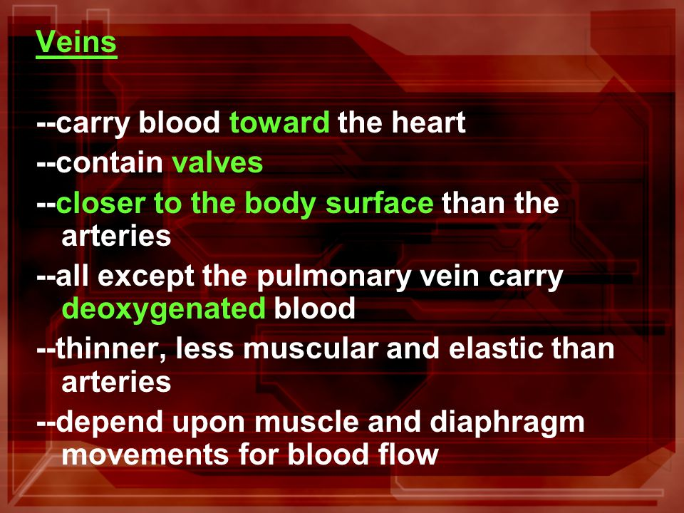 Veins --carry blood toward the heart --contain valves --closer to the body surface than the arteries --all except the pulmonary vein carry deoxygenated blood --thinner, less muscular and elastic than arteries --depend upon muscle and diaphragm movements for blood flow