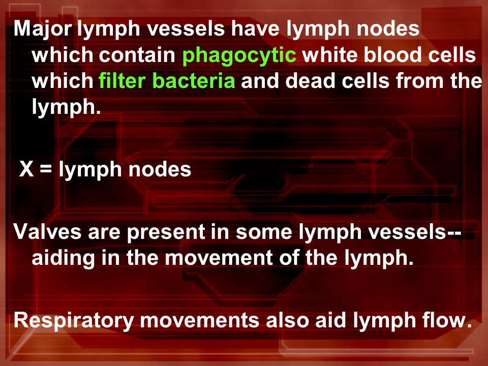 Major lymph vessels have lymph nodes which contain phagocytic white blood cells which filter bacteria and dead cells from the lymph.