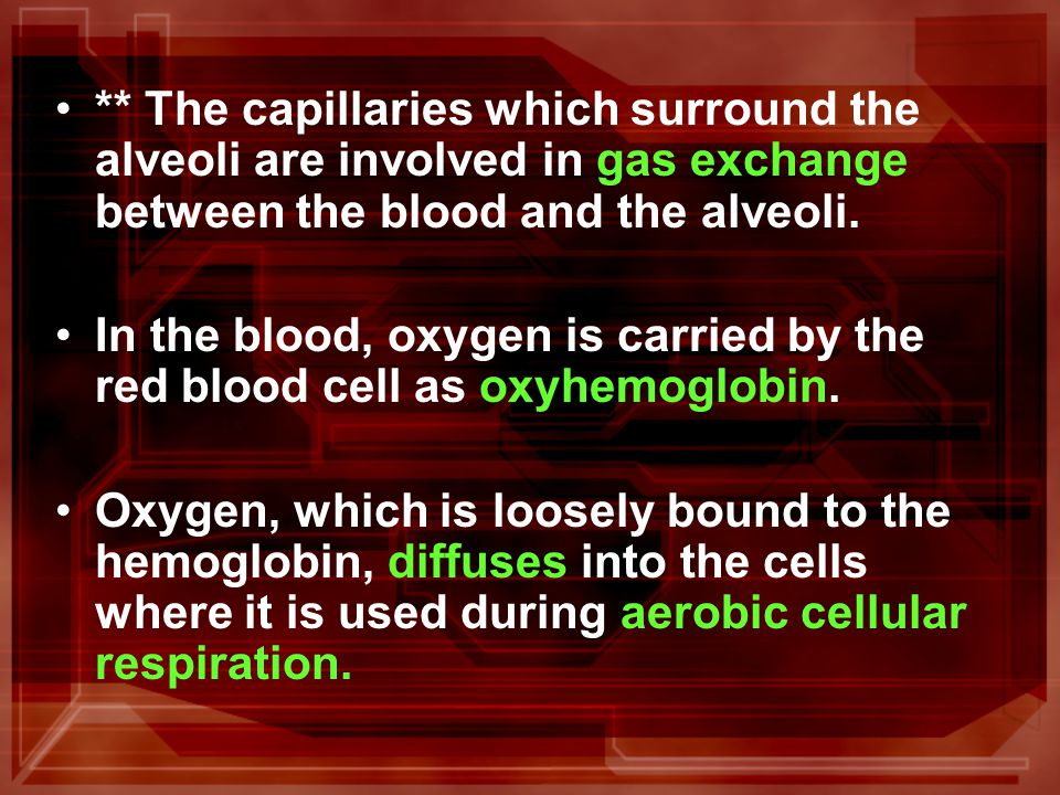 ** The end products of aerobic cellular respiration, water and carbon dioxide diffuse into the blood.