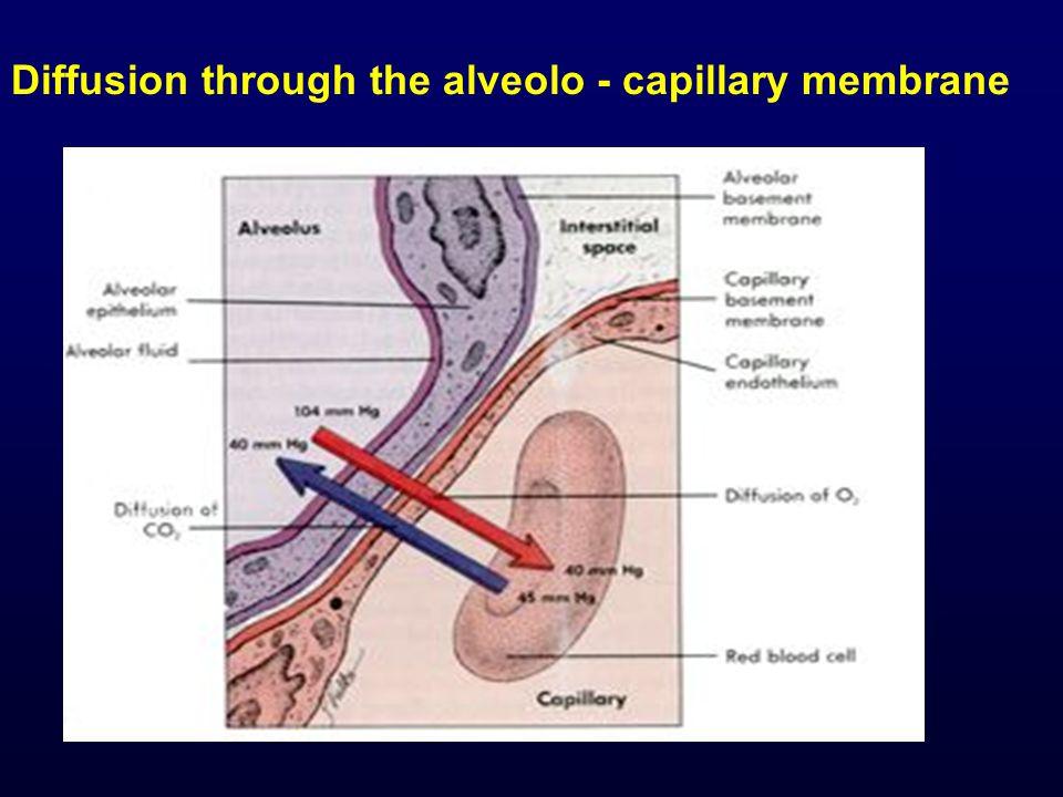 Diffusion through the alveolo - capillary membrane