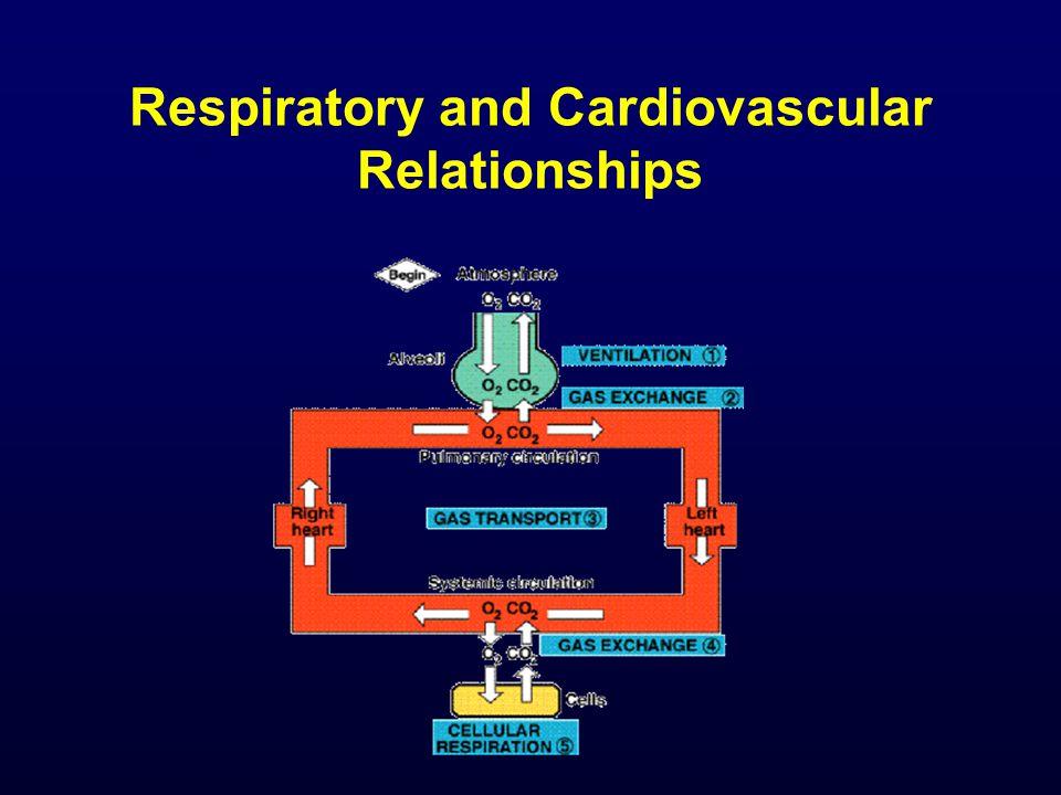 The Lung Capacities Vital capacity VC= V T + IRV + ERV Functional residual capacity FRC = ERV + RV Inspiratory capacity IC= V T + IRV Total capacity TC= V T + IRV + ERV + RV (See practicals)