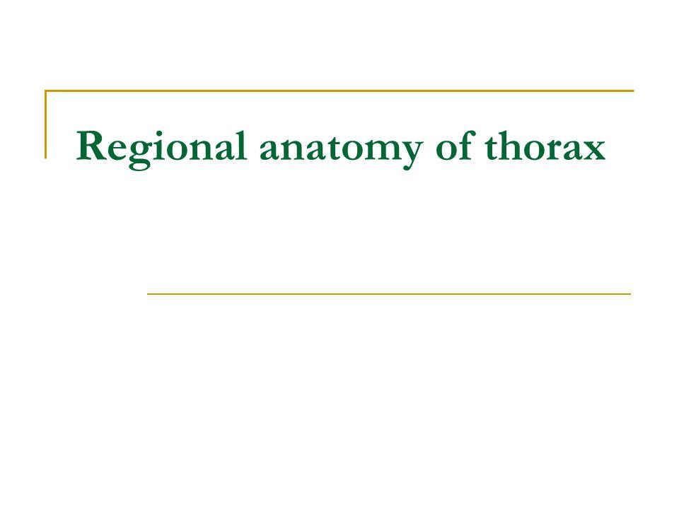 Regional anatomy of thorax