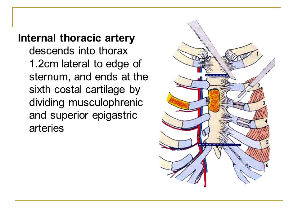 Internal thoracic artery descends into thorax 1.2cm lateral to edge of sternum, and ends at the sixth costal cartilage by dividing musculophrenic and