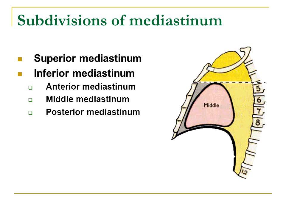 Subdivisions of mediastinum Superior mediastinum Inferior mediastinum  Anterior mediastinum  Middle mediastinum  Posterior mediastinum