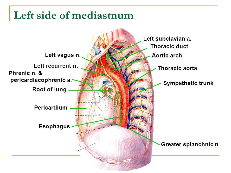 Left side of mediastnum Root of lung Pericardium Phrenic n. & pericardiacophrenic a. Left vagus n. Left recurrent n. Thoracic aorta Sympathetic trunk