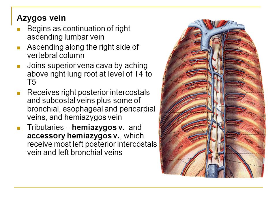 Azygos vein Begins as continuation of right ascending lumbar vein Ascending along the right side of vertebral column Joins superior vena cava by achin