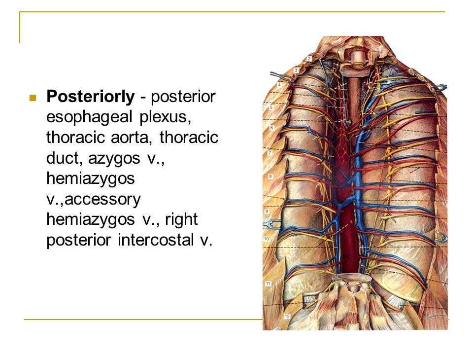 Posteriorly - posterior esophageal plexus, thoracic aorta, thoracic duct, azygos v., hemiazygos v.,accessory hemiazygos v., right posterior intercosta