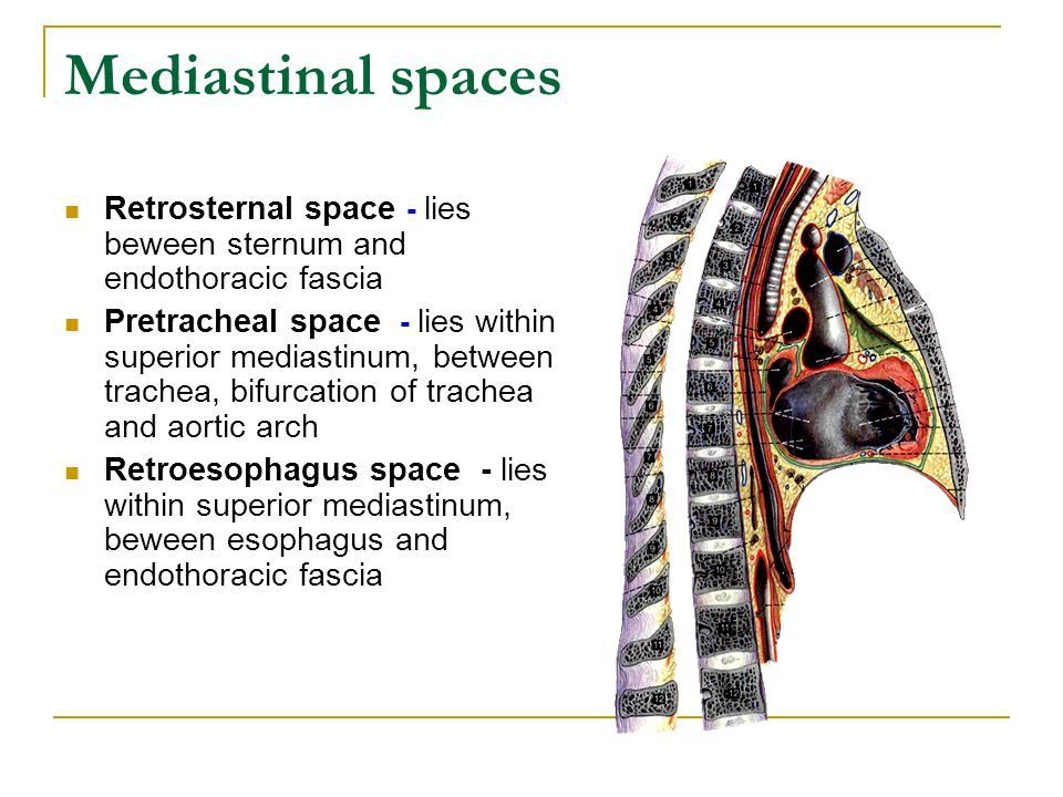 Mediastinal spaces Retrosternal space - lies beween sternum and endothoracic fascia Pretracheal space - lies within superior mediastinum, between trac
