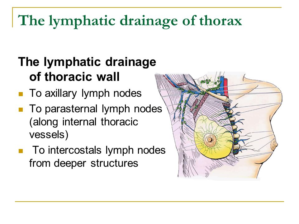 The lymphatic drainage of thorax The lymphatic drainage of thoracic wall To axillary lymph nodes To parasternal lymph nodes (along internal thoracic v