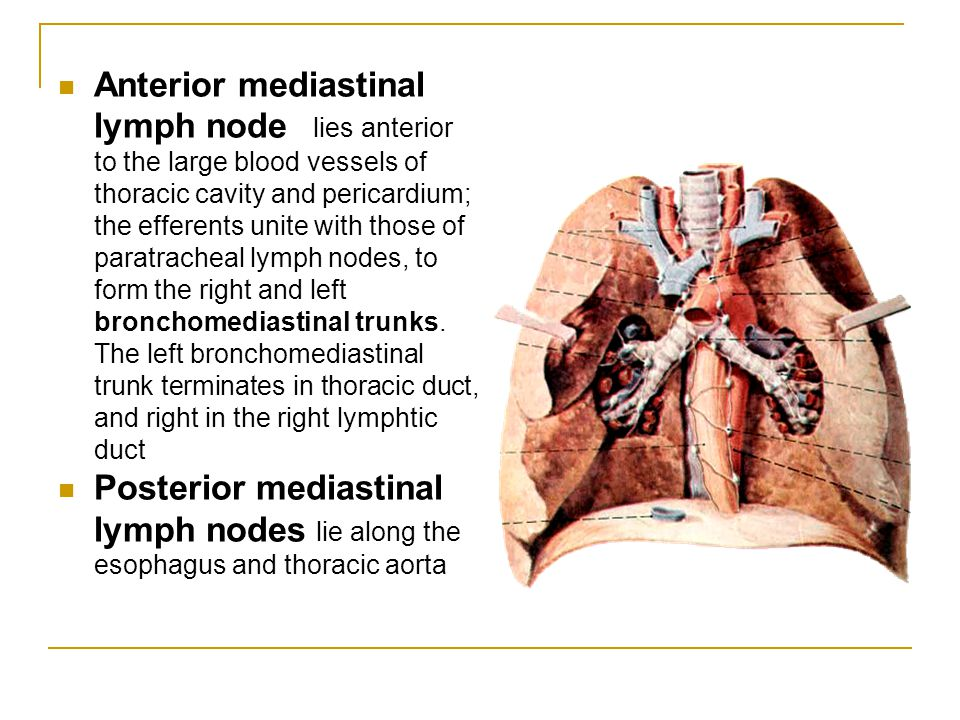 Inferior mediastinum Anterior mediastinum Location - posterior to body of sternum and attached costal cartilages, anterior to heart and pericardium Contents - fat, remnants of thymus gland, anterior mediastinal lymph nodes