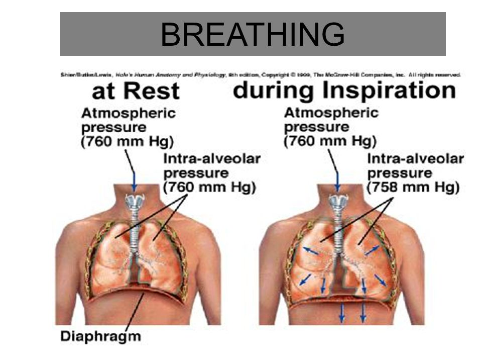 Breathing – The Lungs Breathing animation video http://teachhealthk-12.uthscsa.edu/studentresources/AnatomyofBreathing3.swf Pay attention to the role of the ribcage and the diaphragm and how these creates a pressure difference so breathing can take place.