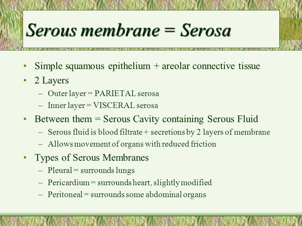 Serous membrane = Serosa Simple squamous epithelium + areolar connective tissue 2 Layers –Outer layer = PARIETAL serosa –Inner layer = VISCERAL serosa