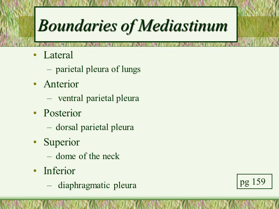 Boundaries of Mediastinum Lateral –parietal pleura of lungs Anterior – ventral parietal pleura Posterior –dorsal parietal pleura Superior –dome of the