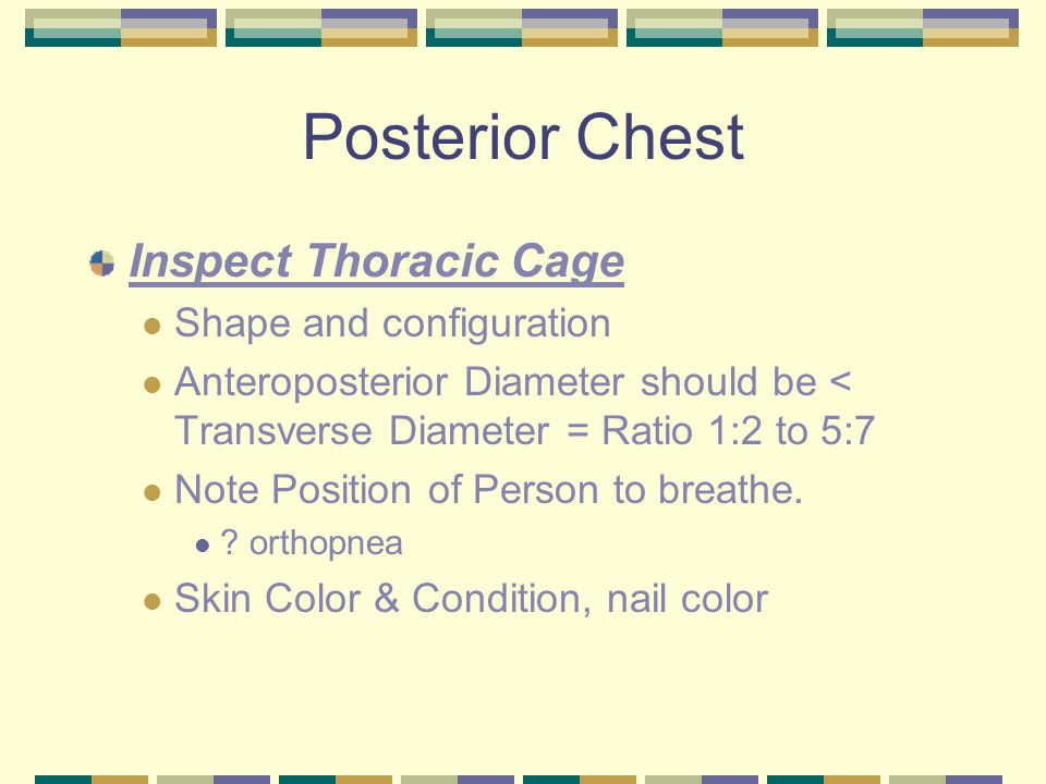 Posterior Chest Inspect Thoracic Cage Shape and configuration Anteroposterior Diameter should be < Transverse Diameter = Ratio 1:2 to 5:7 Note Position of Person to breathe.