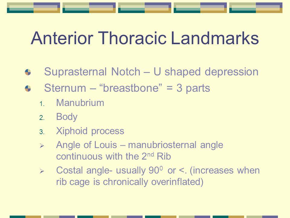 Anterior Thoracic Landmarks Suprasternal Notch – U shaped depression Sternum – breastbone = 3 parts 1.