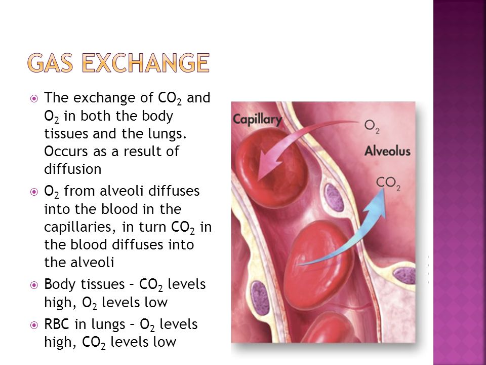 The exchange of CO 2 and O 2 in both the body tissues and the lungs. Occurs as a result of diffusion  O 2 from alveoli diffuses into the blood in t