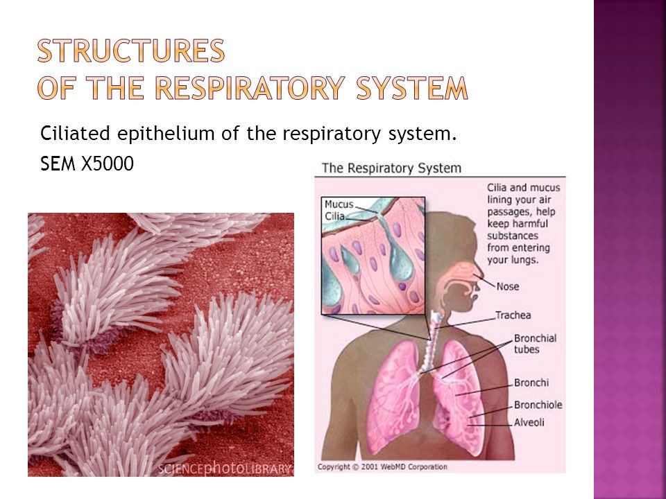  The exchange of CO 2 and O 2 in both the body tissues and the lungs.