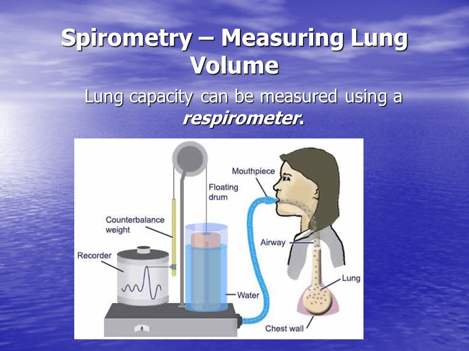 Lung Capacity Measurements Total Lung Capacity – the maximum volume your lungs can stretch.