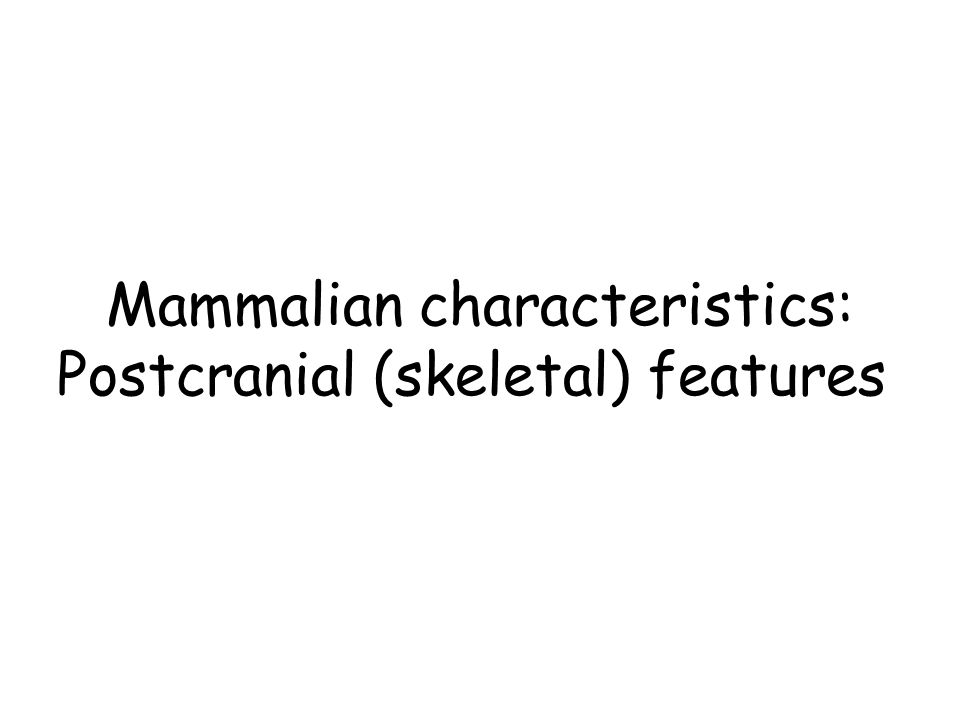 Mammalian characteristics: Postcranial (skeletal) features