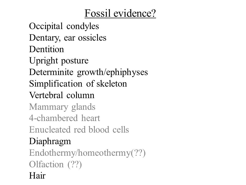 Occipital condyles Dentary, ear ossicles Dentition Upright posture Determinite growth/ephiphyses Simplification of skeleton Vertebral column Mammary glands 4-chambered heart Enucleated red blood cells Diaphragm Endothermy/homeothermy( ) Olfaction ( ) Hair Fossil evidence