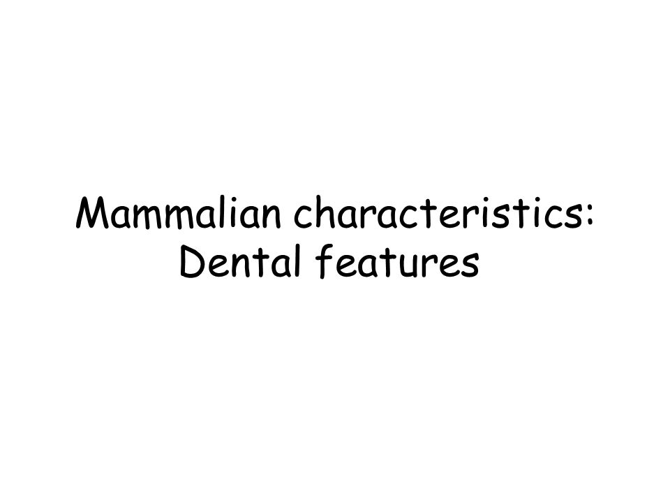 Mammalian characteristics: Dental features