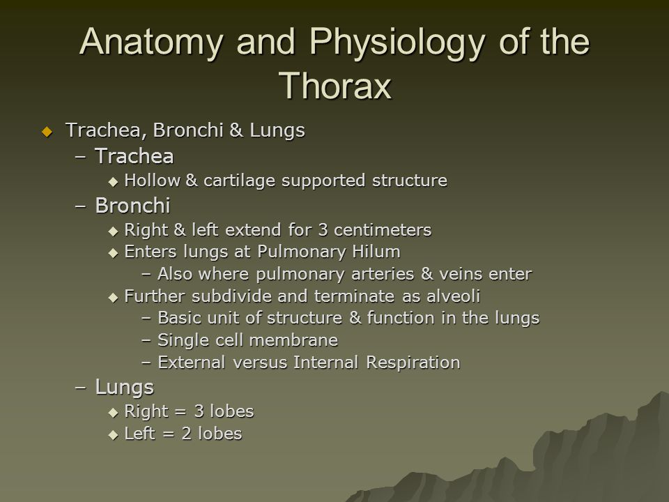Anatomy and Physiology of the Thorax  Trachea, Bronchi & Lungs –Trachea  Hollow & cartilage supported structure –Bronchi  Right & left extend for 3