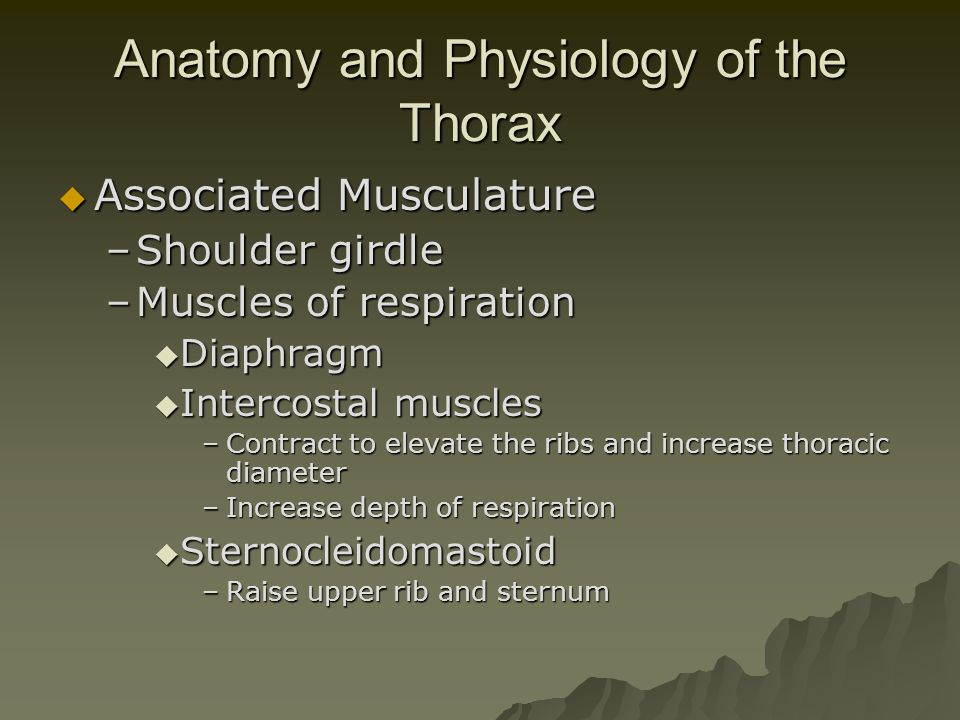 Anatomy and Physiology of the Thorax  Great Vessels –Aorta  Fixed at three sites –Annulus  Attaches to heart –Ligamentum Arteriosum  Near bifurcation of pulmonary artery –Aortic hiatus  Passes through diaphragm –Superior Vena Cava –Inferior Vena Cava –Pulmonary Arteries –Pulmonary Veins  Esophagus –Enters at thoracic inlet –Posterior to trachea –Exits at esophageal hiatus