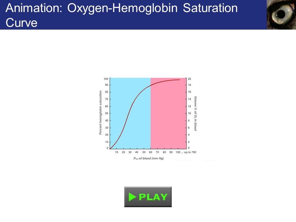 Animation: Oxygen-Hemoglobin Saturation Curve