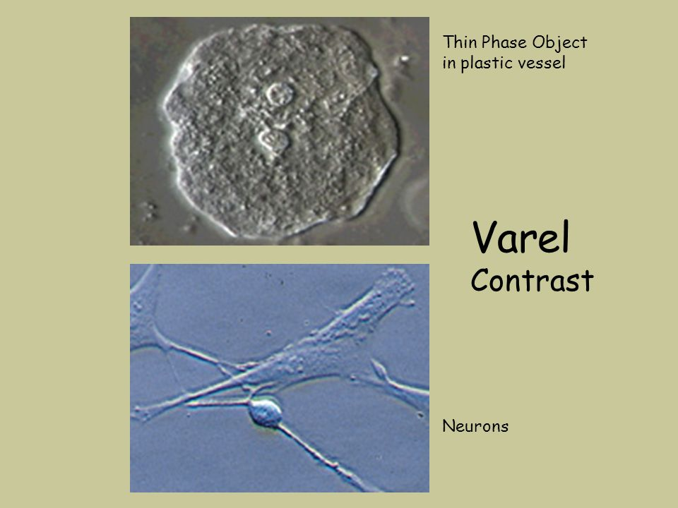 Neurons Thin Phase Object in plastic vessel Varel Contrast