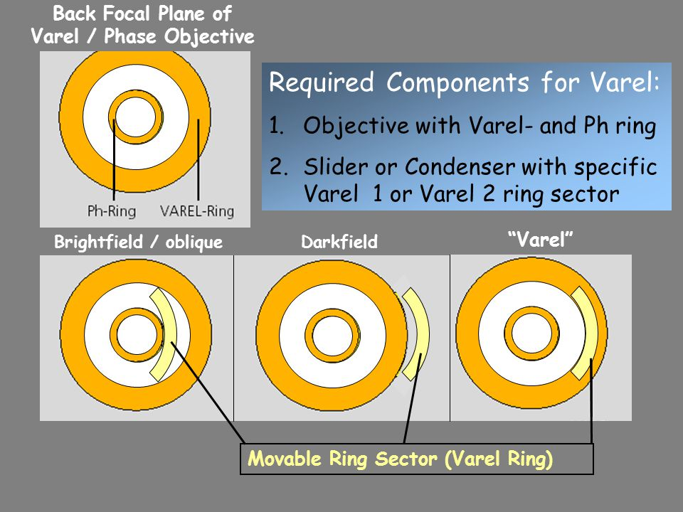 Movable Ring Sector (Varel Ring) Required Components for Varel: 1.Objective with Varel- and Ph ring 2.Slider or Condenser with specific Varel 1 or Varel 2 ring sector Back Focal Plane of Varel / Phase Objective Brightfield / obliqueDarkfield Varel