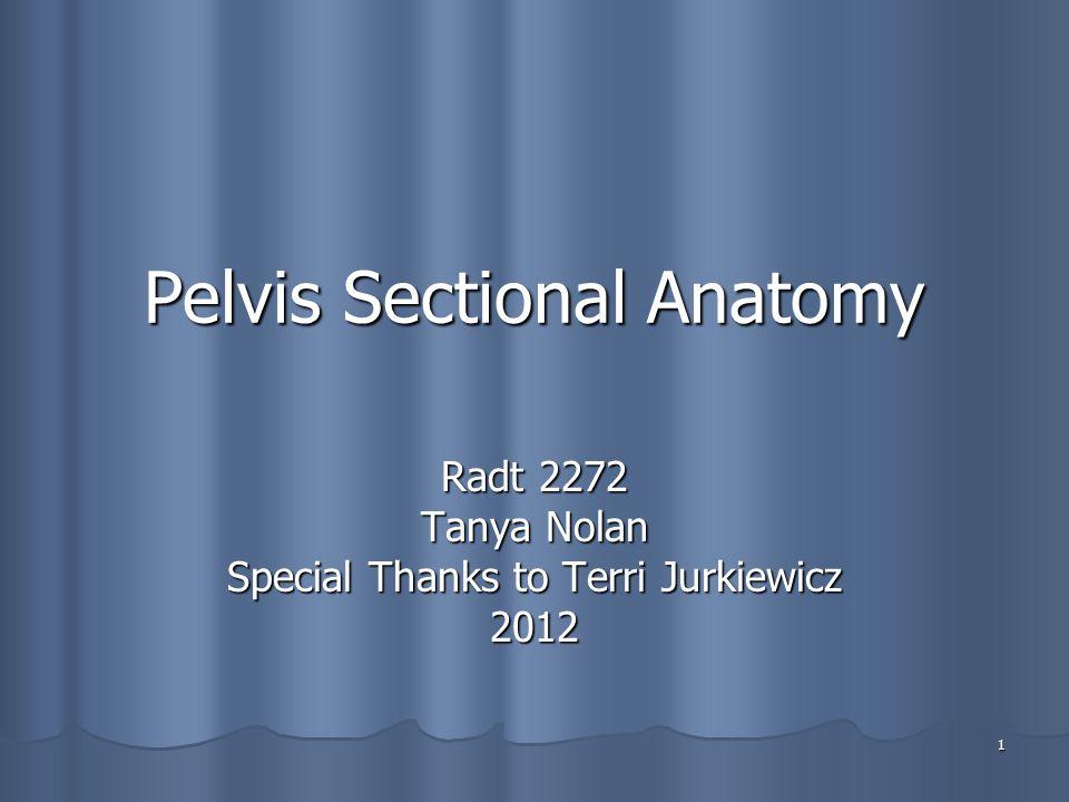 1 Pelvis Sectional Anatomy Radt 2272 Tanya Nolan Special Thanks to Terri Jurkiewicz 2012