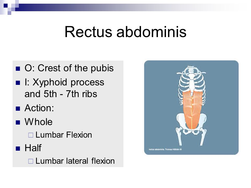 Rectus abdominis O: Crest of the pubis I: Xyphoid process and 5th - 7th ribs Action: Whole  Lumbar Flexion Half  Lumbar lateral flexion