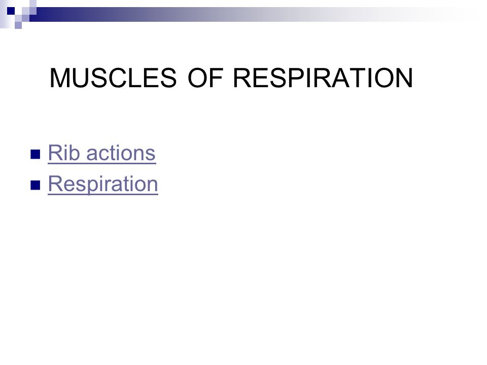 MUSCLES OF RESPIRATION Rib actions Respiration
