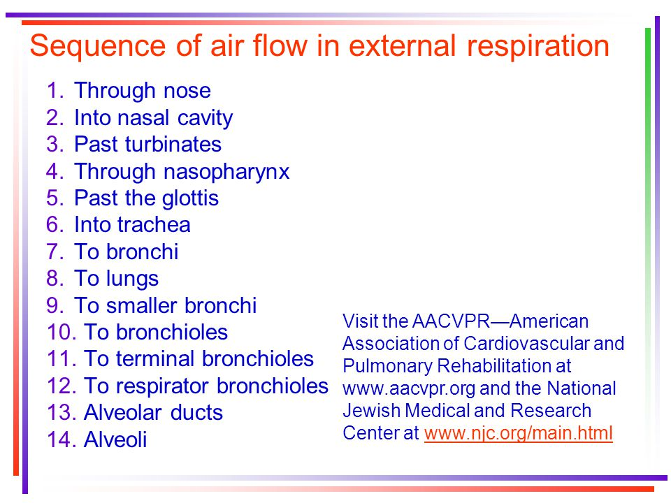 Sequence of air flow in external respiration 1.Through nose 2.Into nasal cavity 3.Past turbinates 4.Through nasopharynx 5.Past the glottis 6.Into trachea 7.To bronchi 8.To lungs 9.To smaller bronchi 10.