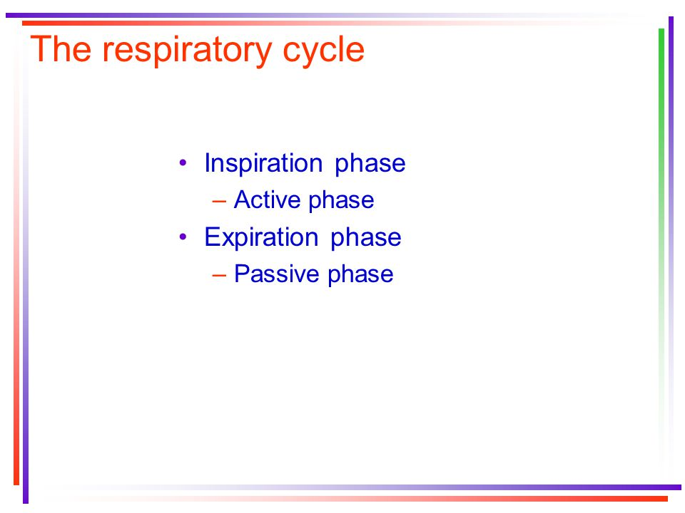 The respiratory cycle Inspiration phase –Active phase Expiration phase –Passive phase
