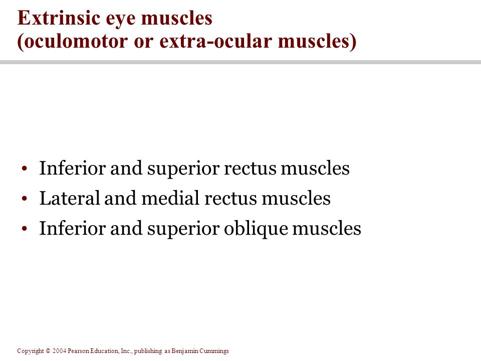 Copyright © 2004 Pearson Education, Inc., publishing as Benjamin Cummings Inferior and superior rectus muscles Lateral and medial rectus muscles Inferior and superior oblique muscles Extrinsic eye muscles (oculomotor or extra-ocular muscles)