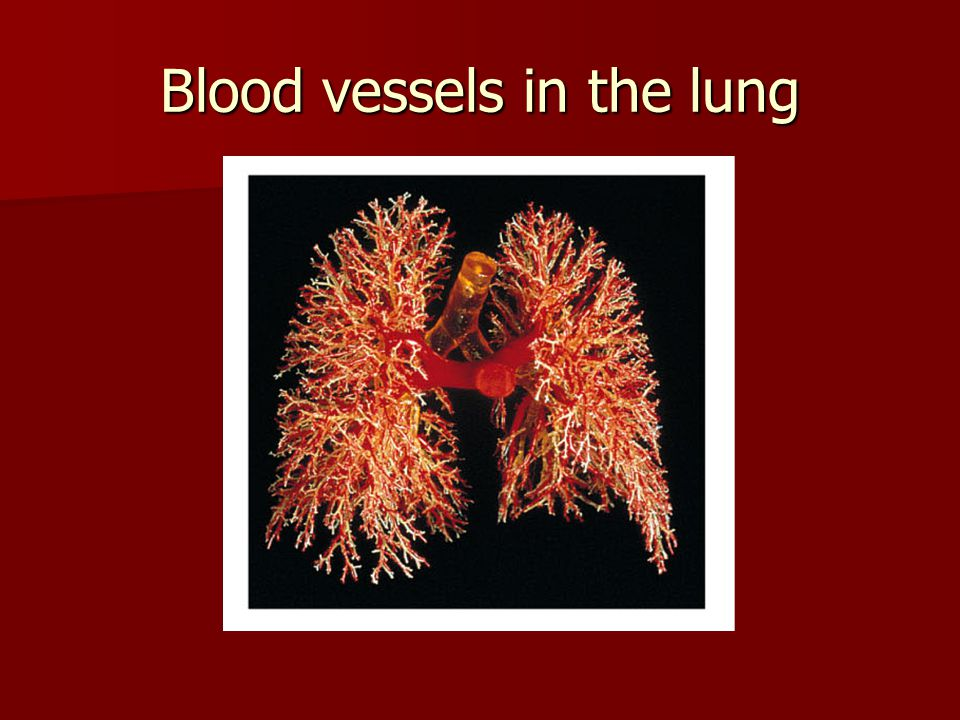 Blood vessels in the lung