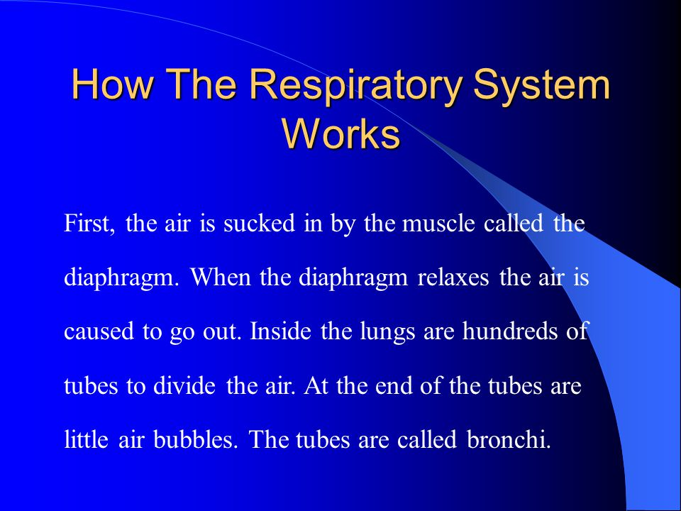 First, the air is sucked in by the muscle called the diaphragm.