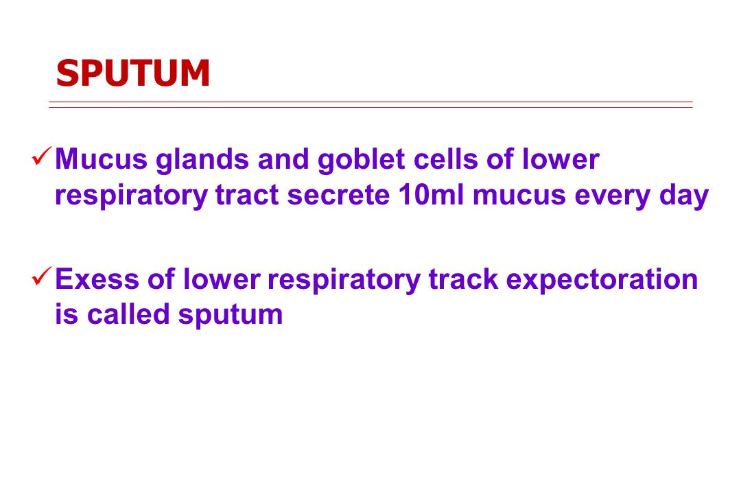 SPUTUM Mucus glands and goblet cells of lower respiratory tract secrete 10ml mucus every day Exess of lower respiratory track expectoration is called sputum