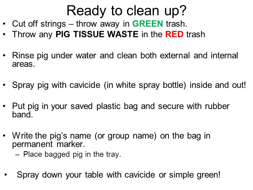 Ready to clean up? Cut off strings – throw away in GREEN trash. Throw any PIG TISSUE WASTE in the RED trash Rinse pig under water and clean both exter