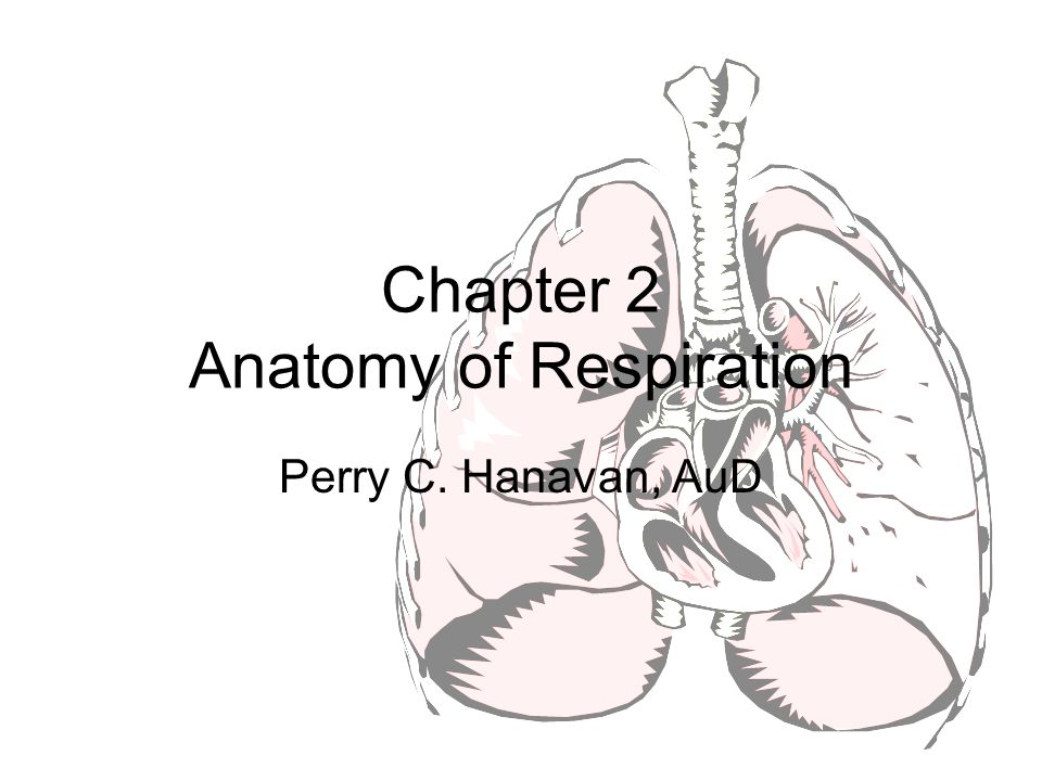 Chapter 2 Anatomy of Respiration Perry C. Hanavan, AuD