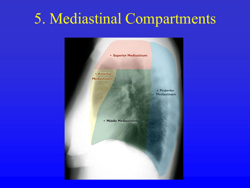 5. Mediastinal Compartments