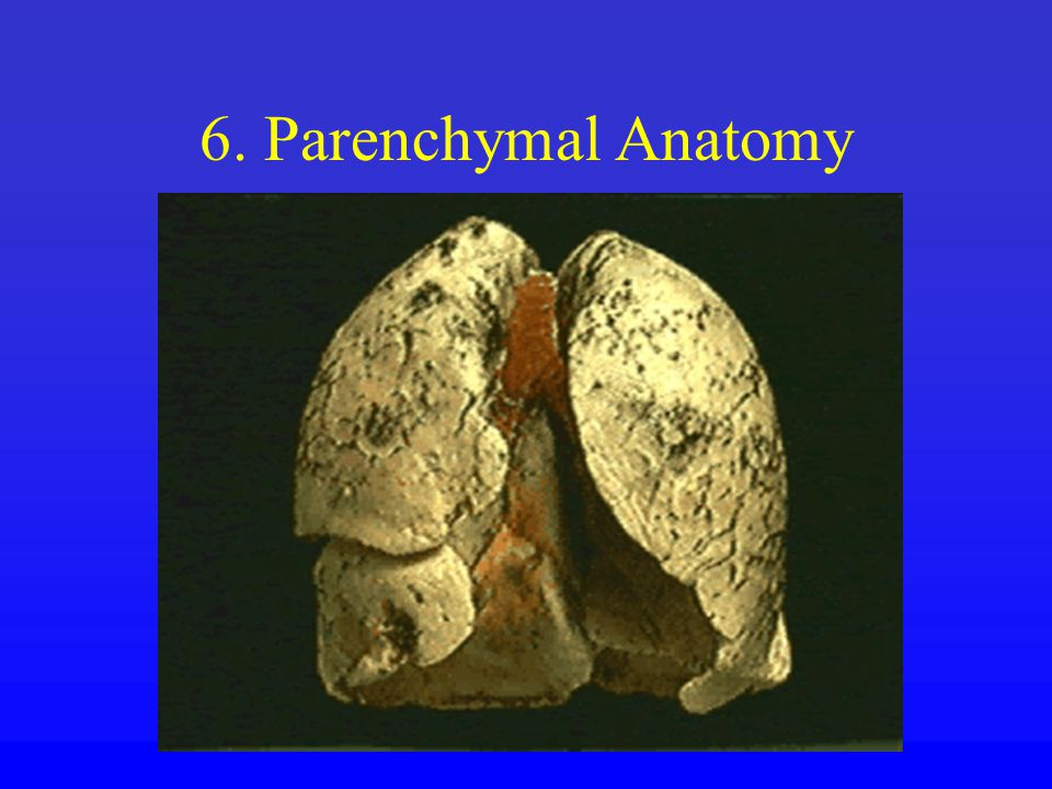 6. Parenchymal Anatomy