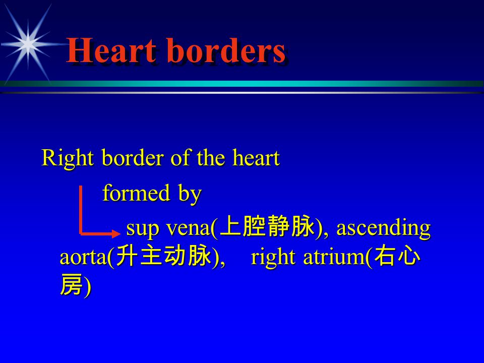 Heart borders Right border of the heart formed by formed by sup vena( 上腔静脉 ), ascending aorta( 升主动脉 ), right atrium( 右心 房 ) sup vena( 上腔静脉 ), ascendin